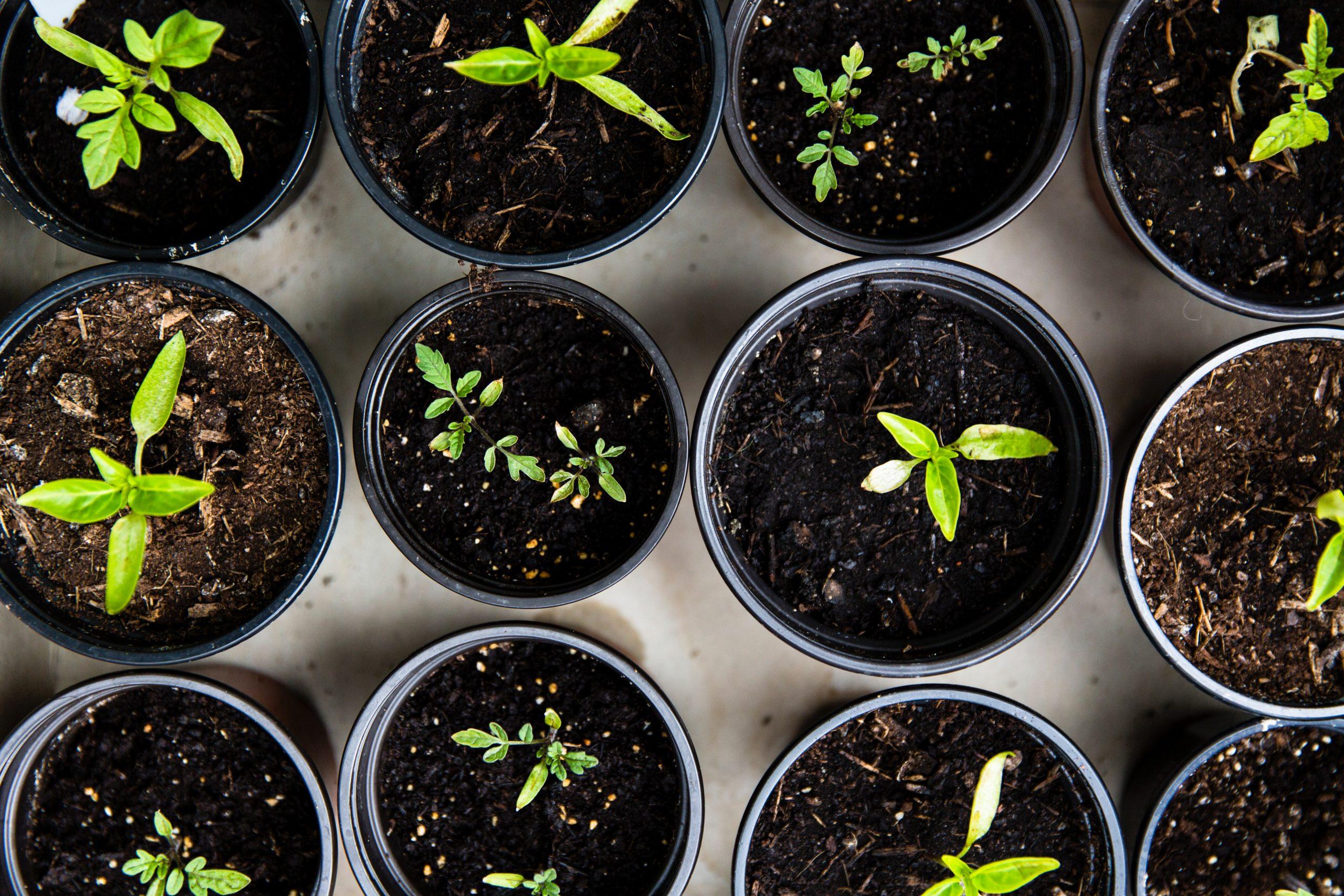 Seed Bank