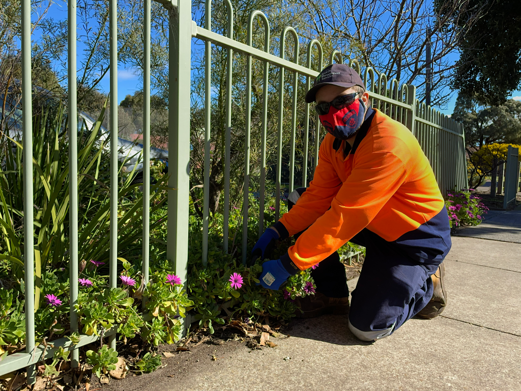 Supported employee wearing a hat, sunglasses and melbourne football club face mask, pulling out weeds from a garden bed