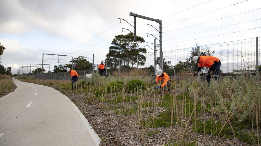 four supported employees planting trees at Seaford railway crossing in Seaford.